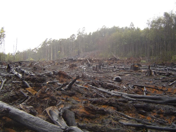 Free Fax-To-Email saves our forests